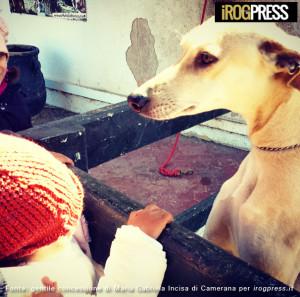 Pet-Therapy-autismo-mahdia_06